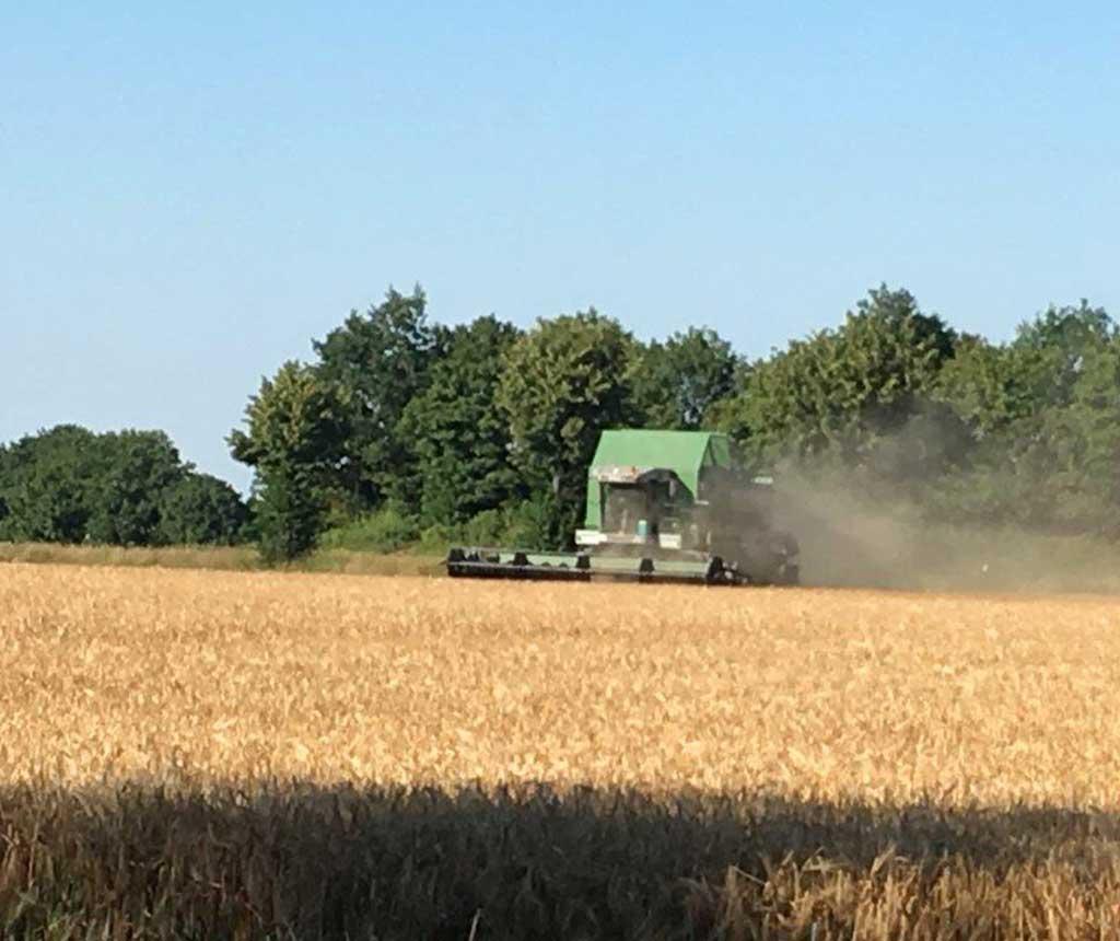 Bremer Agrar Lohnunternehmen – Getreideernte